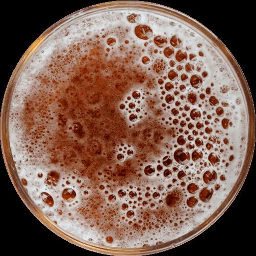 biere-herbochat-dessus